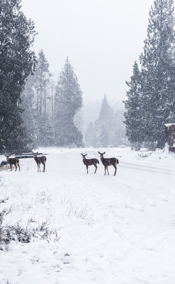 four deer in the snow