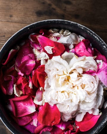 garden roses steeping in hot water for homemade rose water