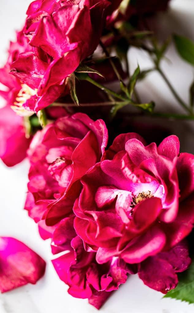 fresh pink garden roses