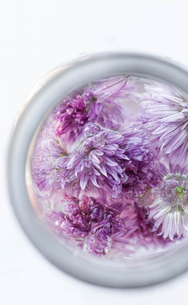 Chive Blossom Vinegar is a beautiful, naturally pink vinegar made from infusing the edible flowers abundantly growing atop chives in the spring with vinegar. chive blossom recipes | chive blossom vinegar | edible flowers | edible flower recipes | infused vinegar | herb infused vinegar | naturally pink foods | purple foods